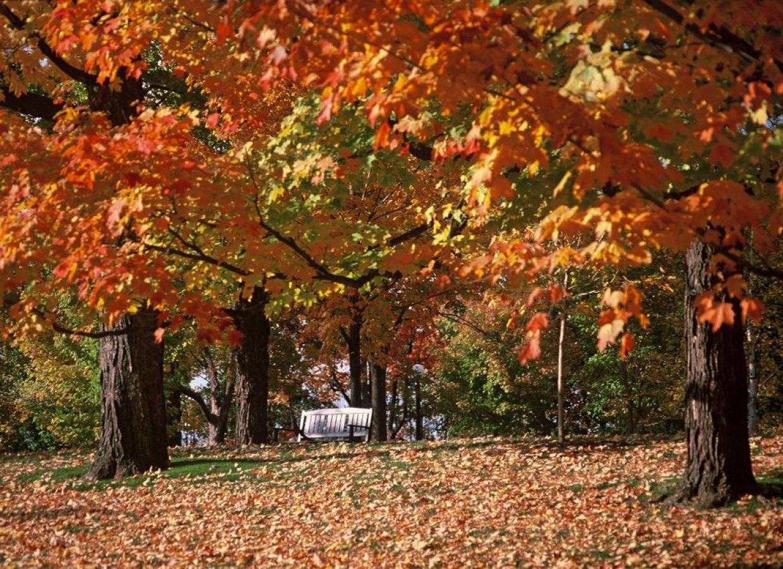 automne canada feuilles