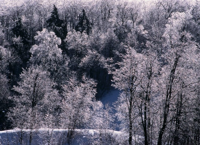 arbres hiver gel canada