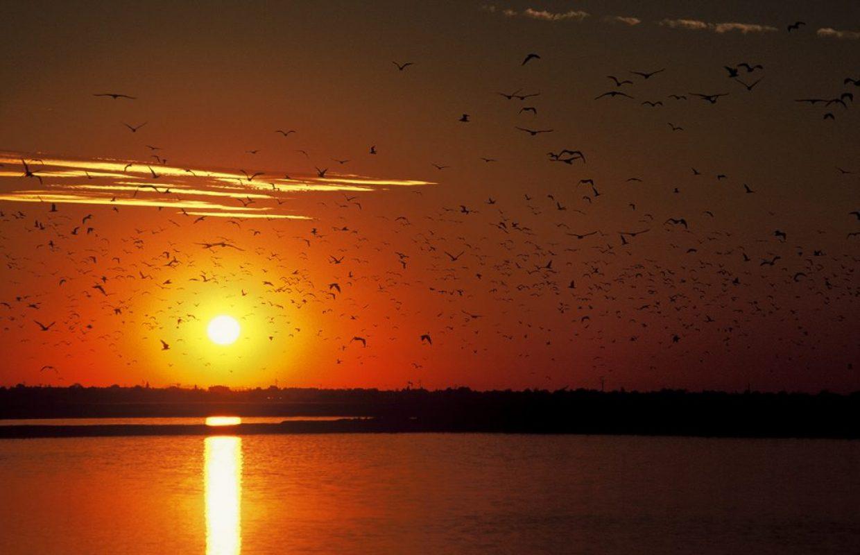coucher de soleil oiseaux