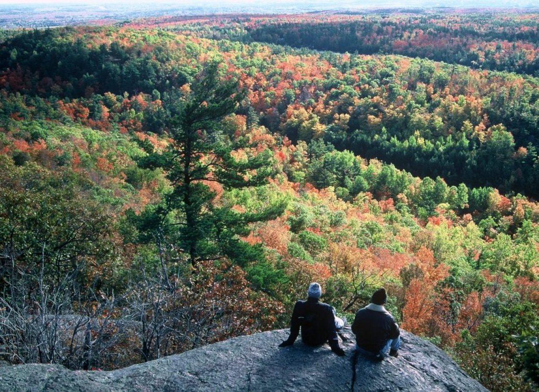 automne canada arbres