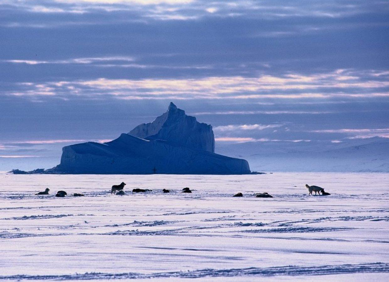 chiens iceberg nunavut