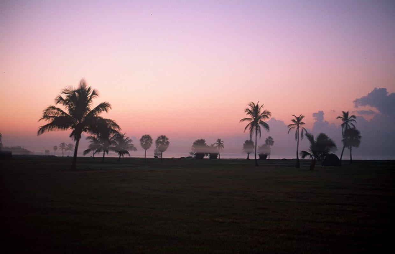 palmiers californie