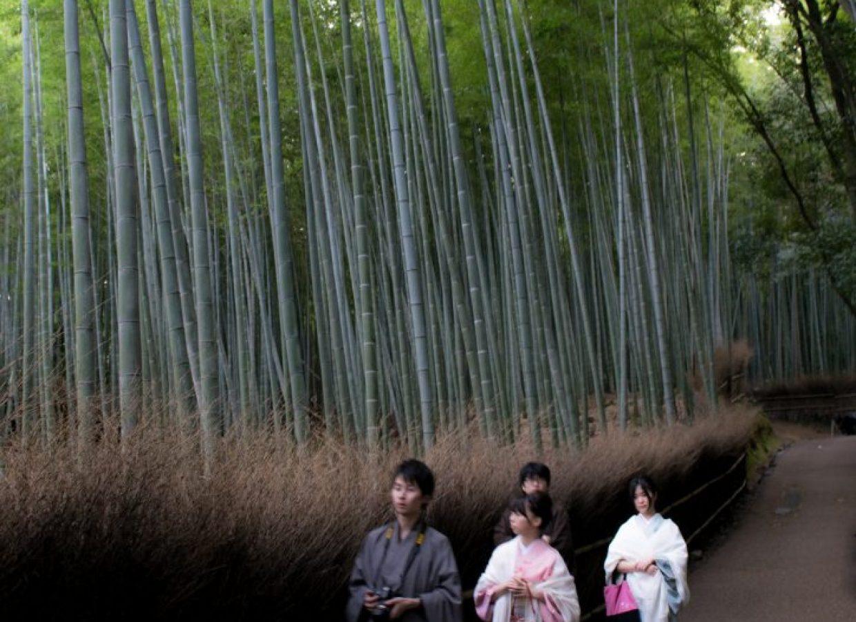 arbres japonais