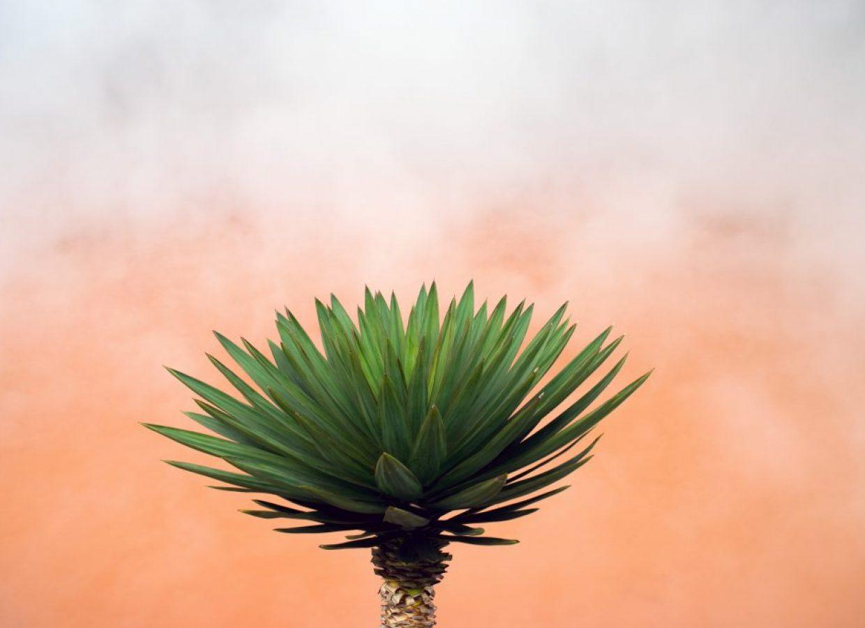 plante japon