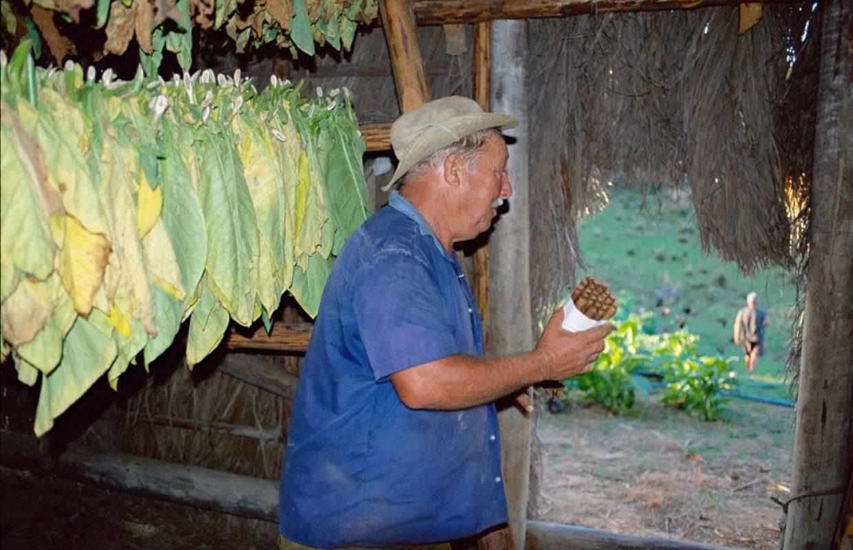 tabac cubain