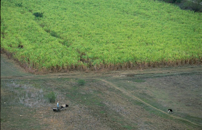 paysage cubain