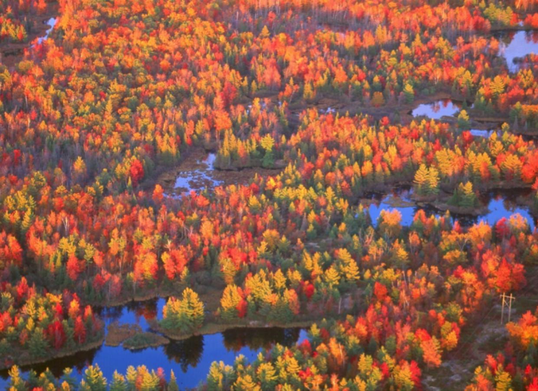 Farandole d'automne